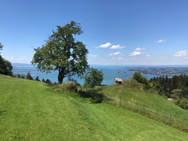 Pfänder-Triathlon: Wandern, Yoga und Picknick